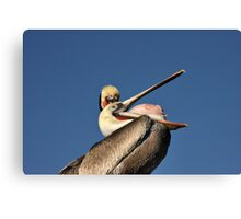 Betcha Can't Do This! Canvas Print