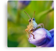 Bug Eyes Canvas Print