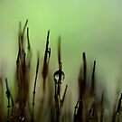 Green Dusk by Sharon Johnstone