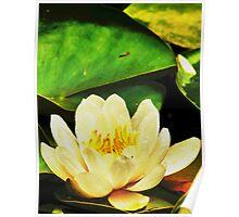 Lotus004 Poster
