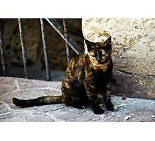 Maltese Cat Photographic Print