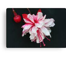 Fuchsia in a forgotten garden Canvas Print