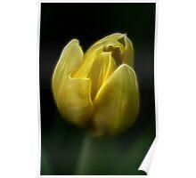 Tulip Fractal Poster