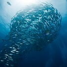 Lightbulb schooling fish by muzy