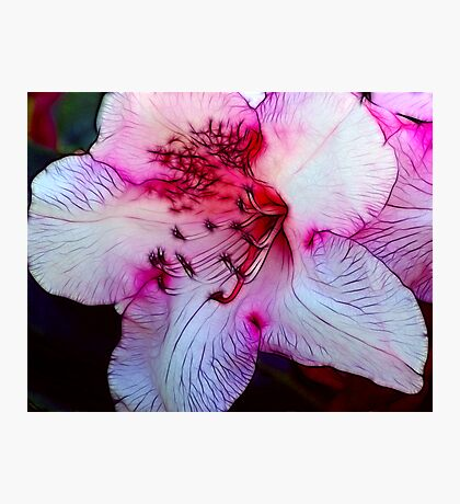 Nearly Pink Photographic Print