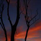 The sunset by Kaushik Rabha