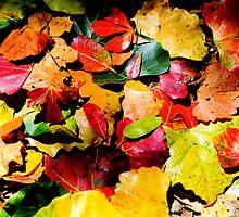 Forest Carpet by Bennie Vivier