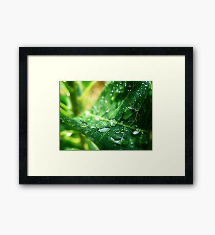 Drip Drop Framed Print