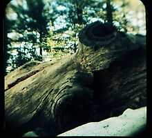 Ttv: Fallen by PeggySue67
