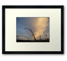 Nature greets the dawn Framed Print