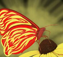 Flame Butterfly by Tim Stringer