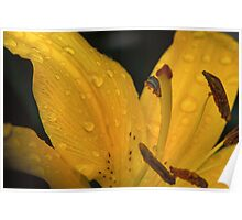 Dewy Day Lily Poster