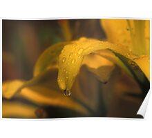 Dew Drops on a Petal Poster