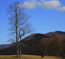 Lone Horse by J.  Roberts