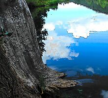 Nature of Trees by Darlene Wilson