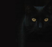 BLACK CAT by Jenifer