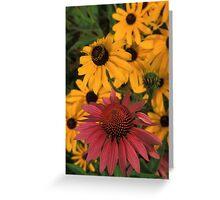 Echinacea & Black-Eyed Susan Greeting Card