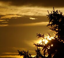 golden pine by tantricpark182