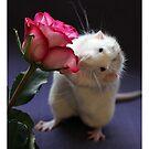 A rose for you! by Ellen van Deelen