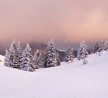 Purple snow by Marcel Ilie