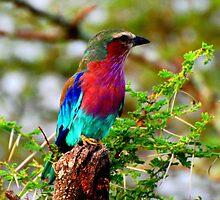 """""""Pretty Birdey"""" by JohnsJems"""