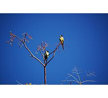 Green Monk Parakeets Photographic Print