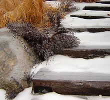 Garden Steps in Winter  by clizzio