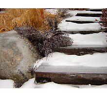 Garden Steps in Winter  Photographic Print