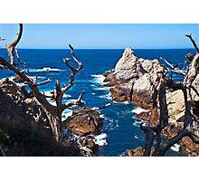 Sea Otter at Pinnacle Cove, Point Lobos, California Photographic Print