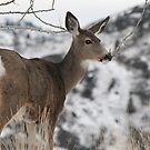 Winter Deer by Tiffany Vest