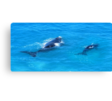 'Southern Right Whales' Canvas Print