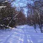 Winter Path by Tammy F