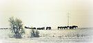 Snow Horses by wwyz