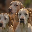 Fox Hounds (1) by SWEEPER