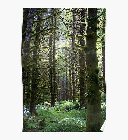 Mossy Forest Poster