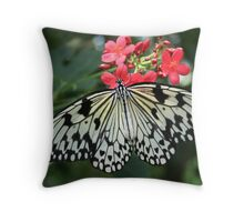 Nature Photography Pretty Black and White Butterfly Throw Pillow