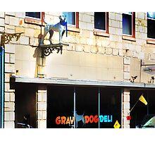Gray Dog Photographic Print
