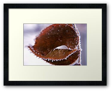 Icy Leaf by Brian Hendricks