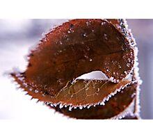 Icy Leaf Photographic Print