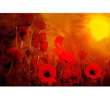 Poppy heaven'... Photographic Print