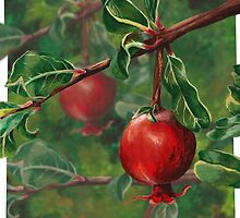 Queen Mary's Pomegranate by ImogenSmid