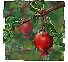 Hand Painted Red Pomegranate Fruit with Green Leaf Background Photographic Print