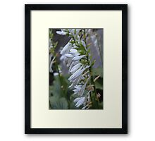 Fresh Breath Framed Print