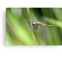 My Fly! Canvas Print