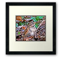 """ This Rock Pipet was well Hidden in  the undergrowth"" Framed Print"