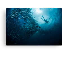 Schooling Jacks and Diver Canvas Print