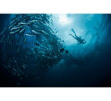Schooling Jacks and Diver Photographic Print