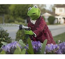 Kermit  Photographic Print