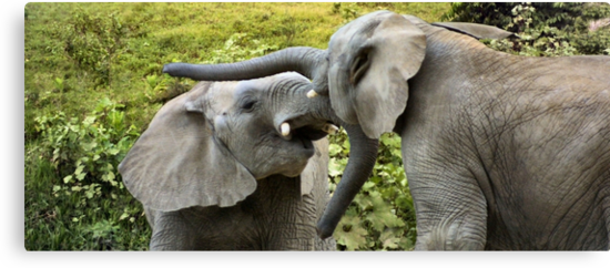 Tiny Tussling Tuskers by missmoneypenny
