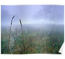 Dew Soaked Web Poster